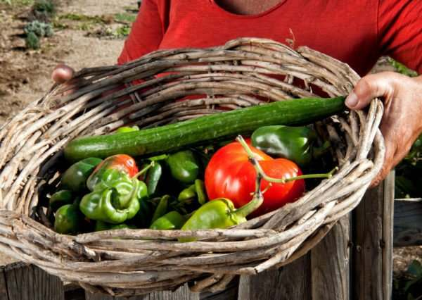 Fresh and Organic vegetables are produced in Mykonos Island