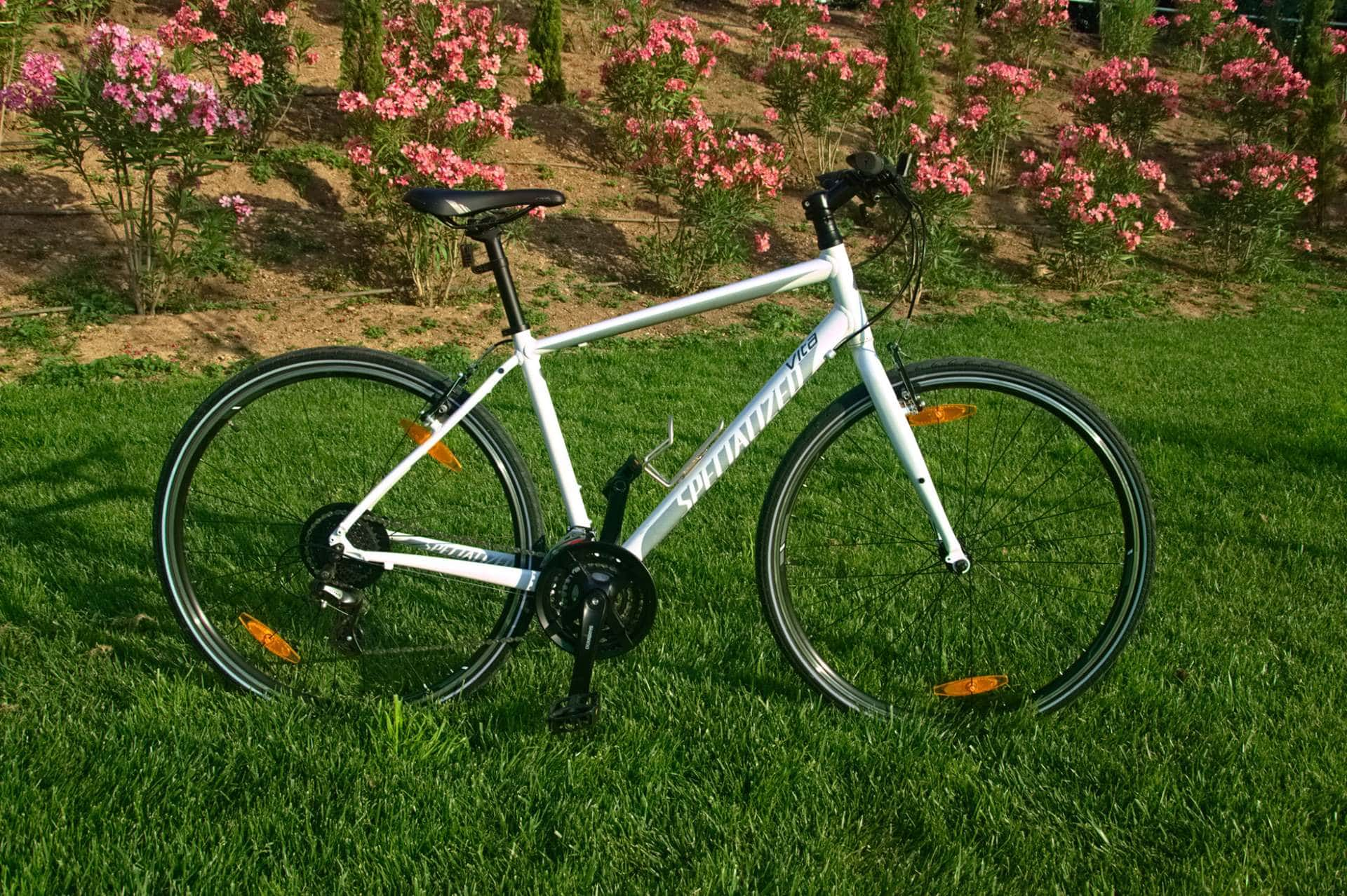 Specialized Vita (Fitness Bike) - GrCycling Rentals